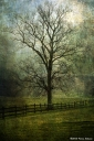 Rockefeller-Tree-5-web