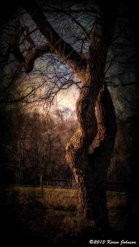 Rockefeller Tree 46