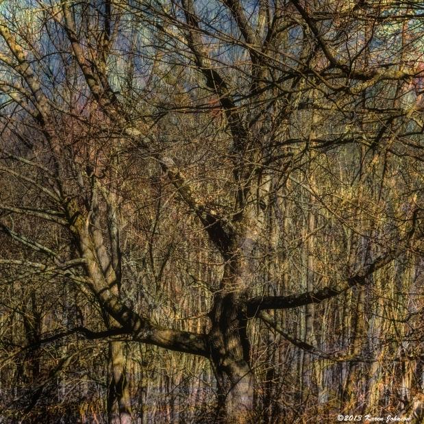Angler Fly Tree NG