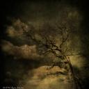 Tod's Point Jan 2014 Tree Series 1