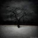 Witch-Tree