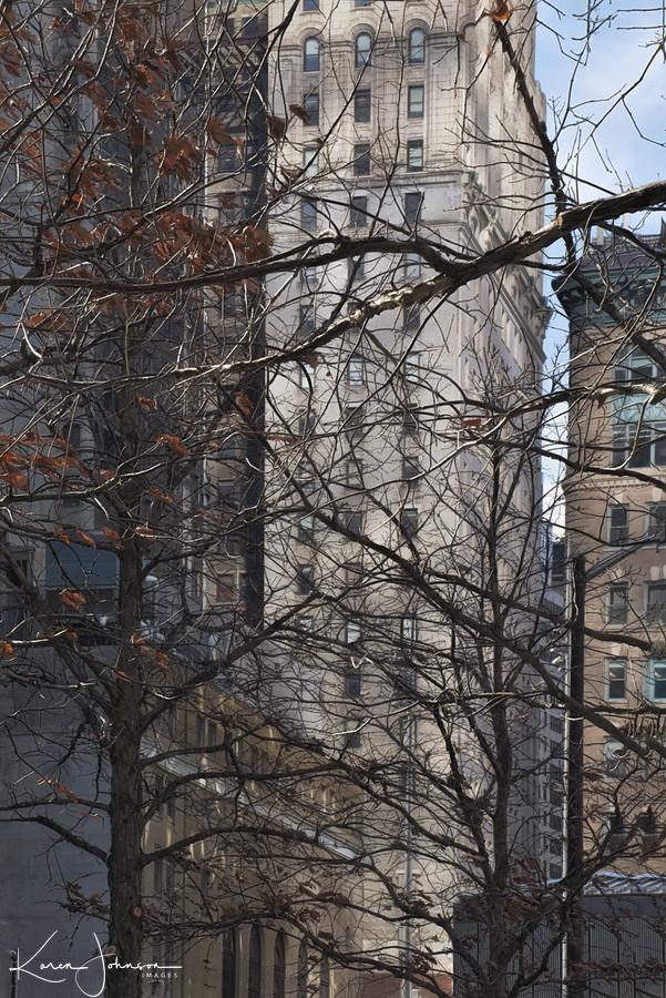 NYC Building and Tree-Work Copy II