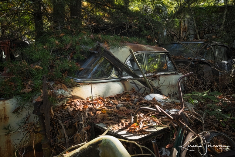 Car--under-the-pines-tree